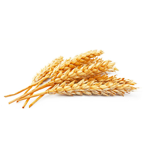 snack_wheat2